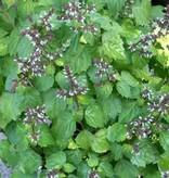 Farfalla Patchouli etherische olie BIO 5 ml.