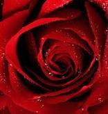 Farfalla Roos etherische olie BIO puur 1 ml.