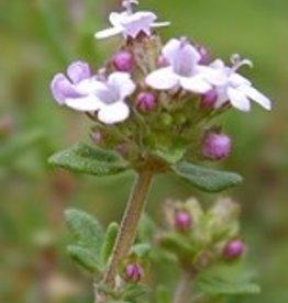 Farfalla Tijm (Thymian) ct linalool BIO 5 ml.
