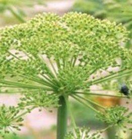 Farfalla Venkel ( Fenchel) zoet BIO Demeter 5 ml.