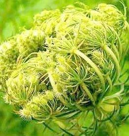 Farfalla Wortelzaad (Karottensamen) 5 ml.