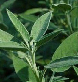 Farfalla Salie kleinblad (Salbei Kleinblattrig) - ketonarm BIO 5 ml.