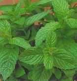 Farfalla Pepermunt (Pfefferminz) Hydrolaat 100 ml.
