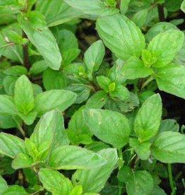 Farfalla Bergamotmunt (Bergamottminze/Citroenmunt) bio, 5 ml.
