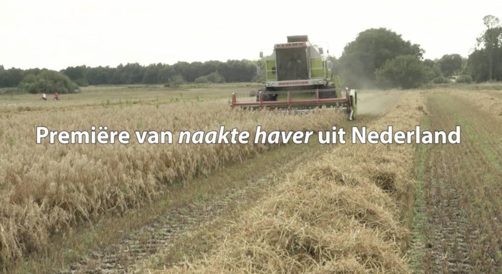 Eerste Naakte Haver à la Rineke van Nederlandse bodem