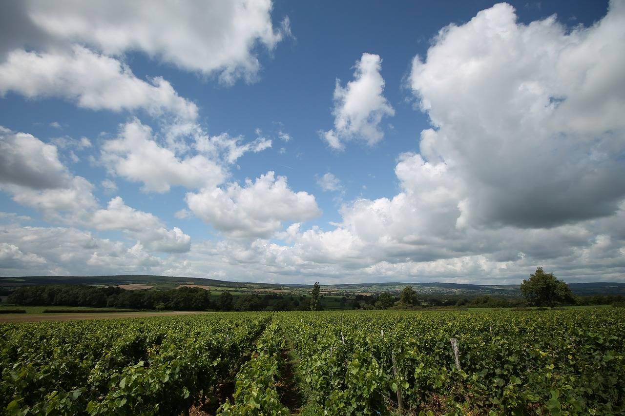 Louis Roederer: Drie weetjes over het champagnehuis