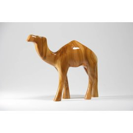 Desert Rose Baby camel standing