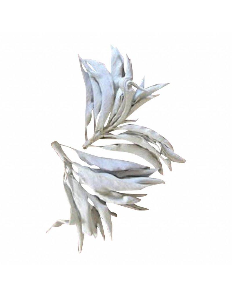 Losse witte salie 100 gram