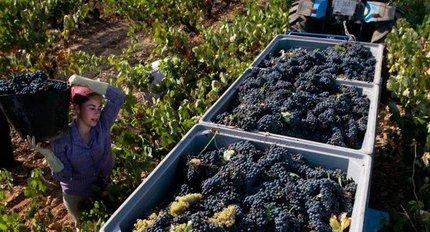 Wijnbouw selectie