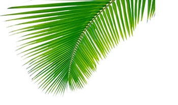 COCO MUST KNOW: Bijzondere designs met kokos?