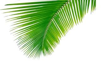 COCO MUST KNOW: Kokosolie bij spierpijn?