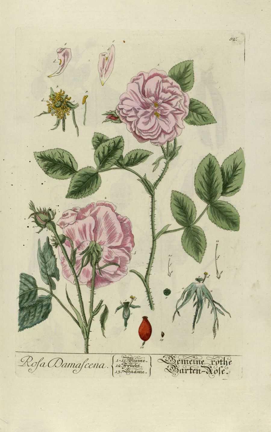 werfzeep - roos