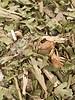Bauerngartenmischung | Bio