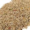 Blend various grass and bird seed