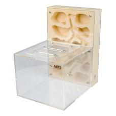 Ant Farm Premium Plaster