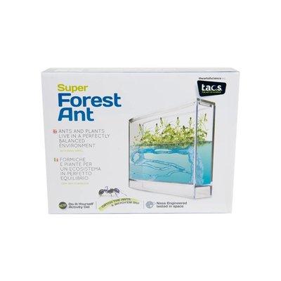 Antquarium Antfarm Forest