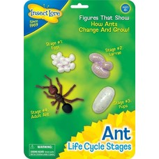 Mieren levenscyclus