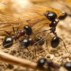 Mierenfamilie (gel)