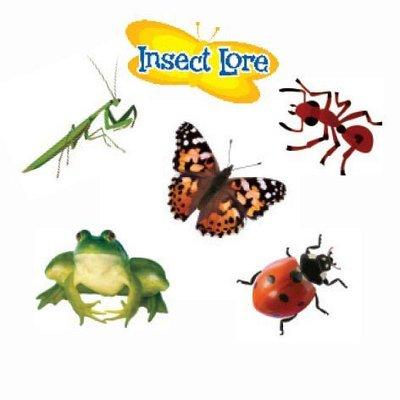 Insecten plak tattoos