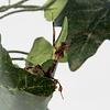SALE - BUGzzz L insectenverblijf 5000ml