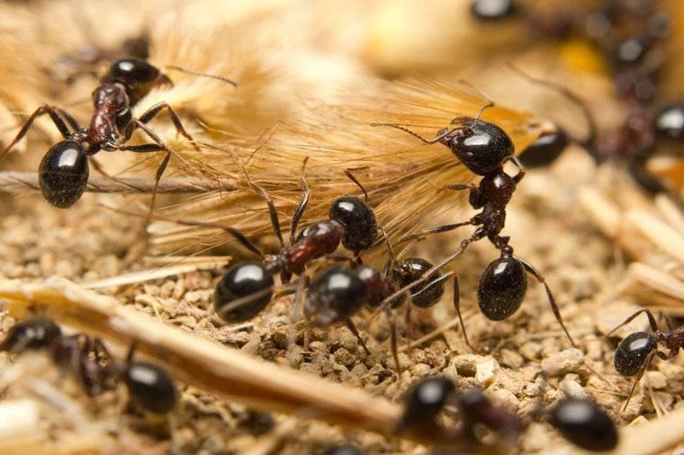 Mierenfamilie S met 5-10 werksters