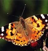 Vlinder kweekset