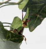 BUGzzz L insectenverblijf 5000ml