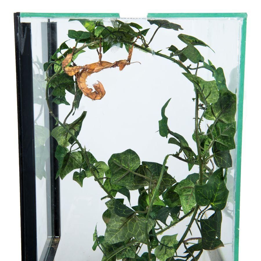Insecten Terrarium