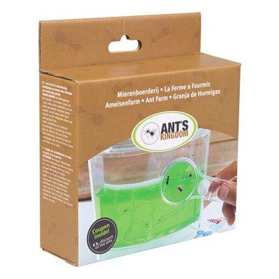 Gel-Ameisenfarm inkl. Ameisen und LED-Beleuchtung.