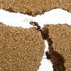 Ameisenfarm Sand T-Farm inklusive Lasius 10+