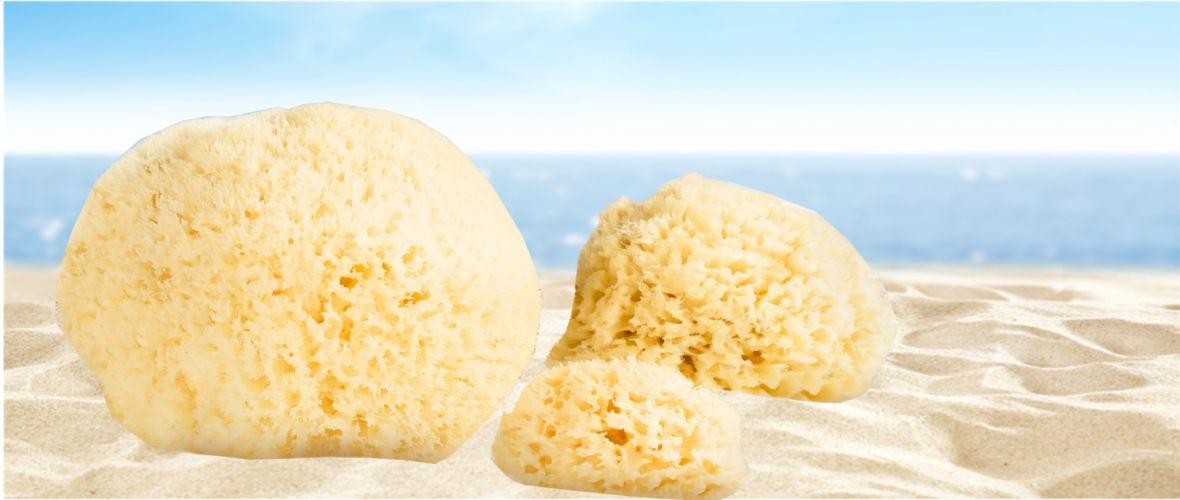 NEW! Honeycomb natural bath Sponge - for your bodycare - in different sizes!
