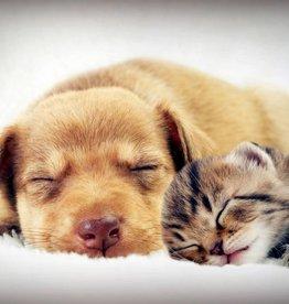 Schlafende Tierfreunde