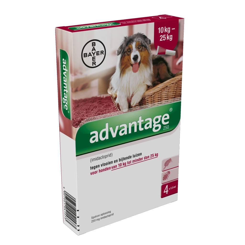 Advantage Advantage 250 Hond 10kg-25kg | tegen vlooien