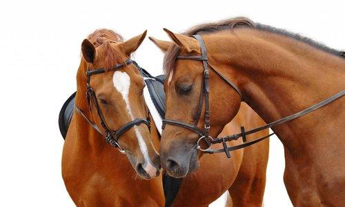 Hier finden Sie Ihr lieblings Pferdefutter