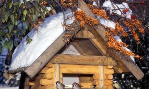 Wildvogelfutter