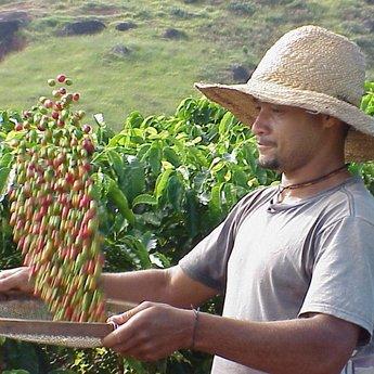 Santos Brazilië, 100% arabica, 250 gr