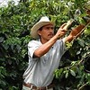 Koffiebranderij Van Ouytsel Marcala Honduras