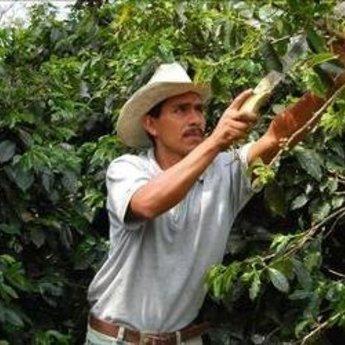 Koffiebranderij Van Ouytsel Marcala Honduras, 100%arabica, washed