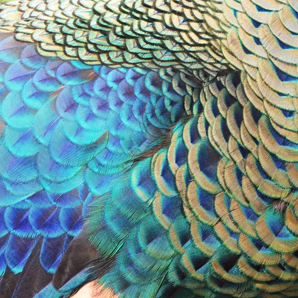 Umo Art Gallery UA-SS227617846