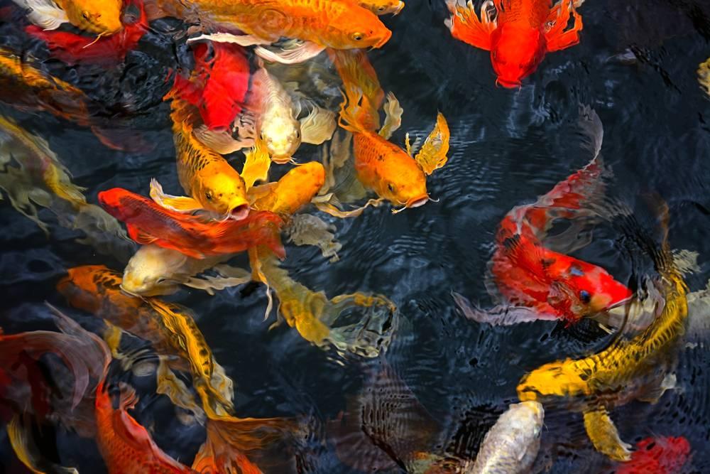 Umo Art Gallery UA-SS208666498