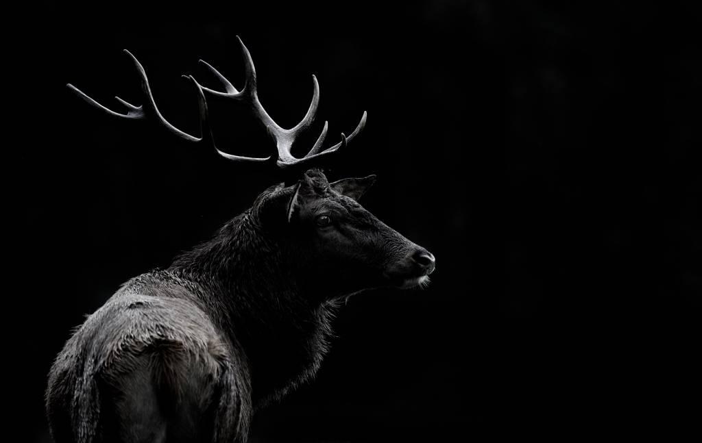 Umo Art Gallery The deer soul