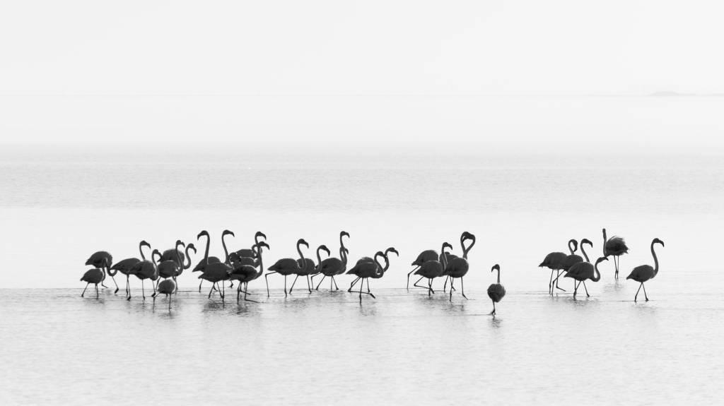 Umo Art Gallery Flamingos