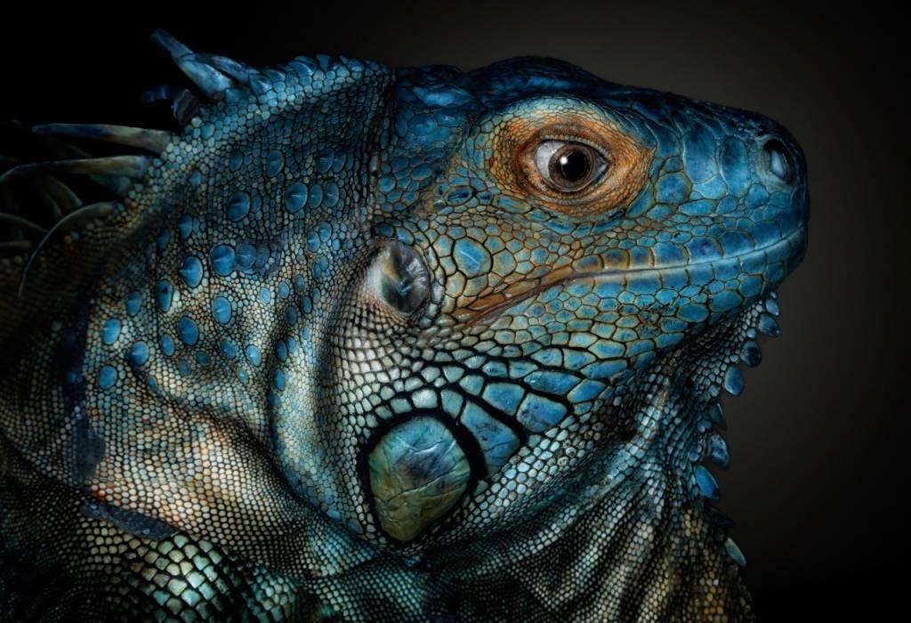 Umo Art Gallery Dragons are awake...