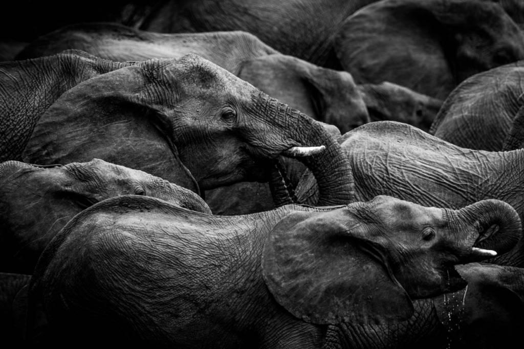 Umo Art Gallery Elephant herd