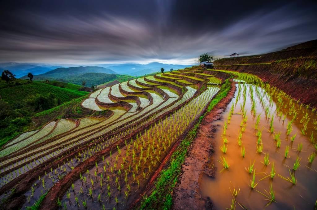 Umo Art Gallery Unseen Rice Field