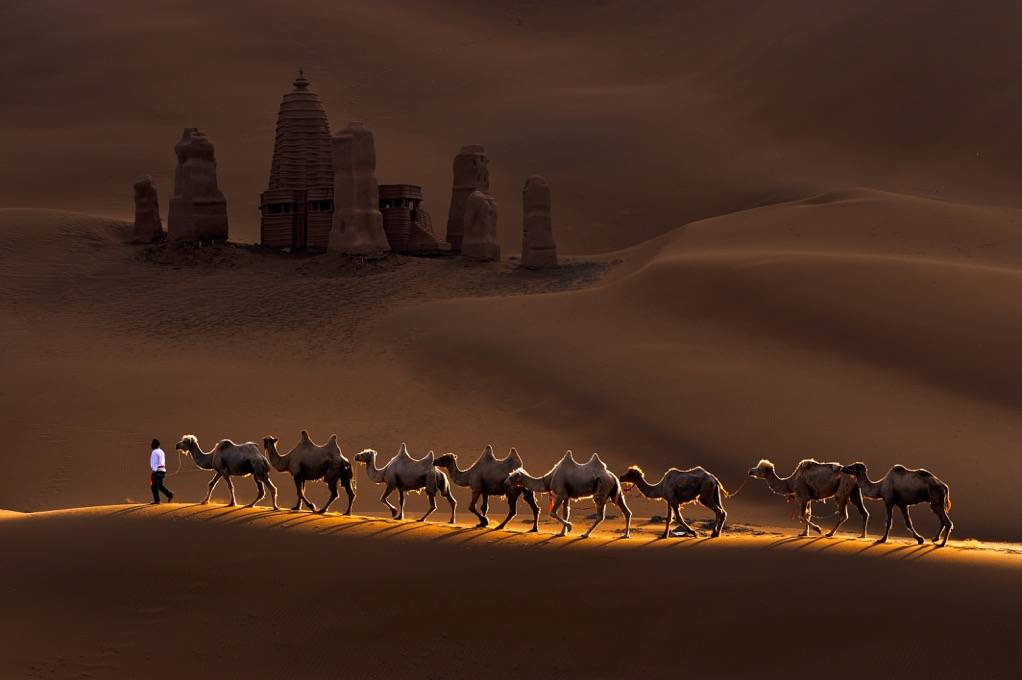 Umo Art Gallery Castle and Camels