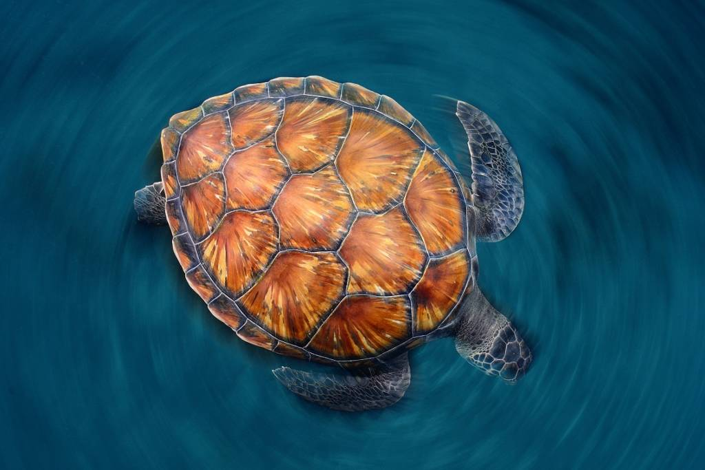 Umo Art Gallery spin turtle