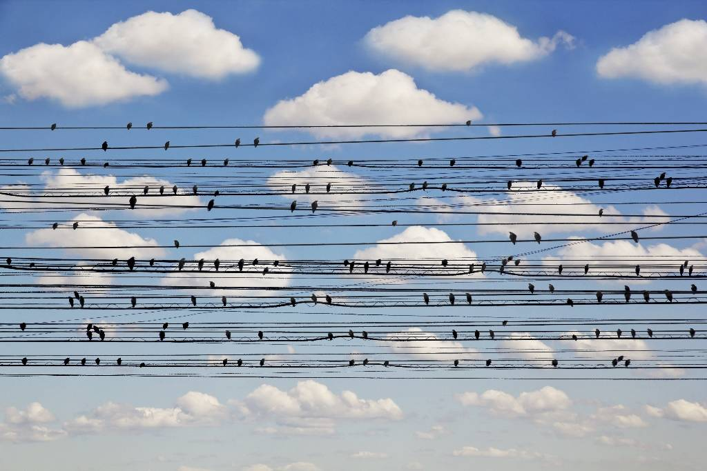 Umo Art Gallery Cantus Arcticus - Concerto for Birds