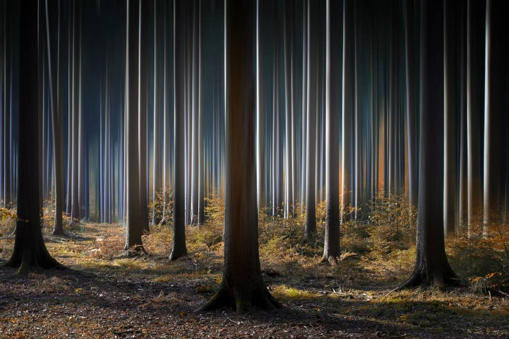 Umo Art Gallery Mystic Wood