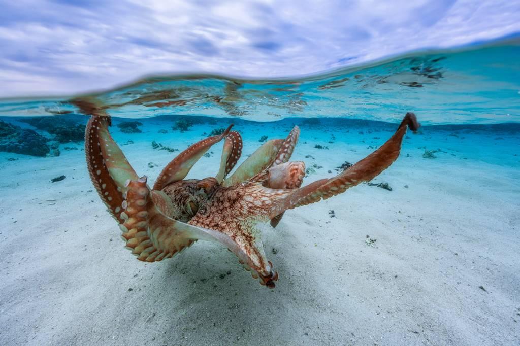 Umo Art Gallery Octopus